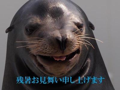 MOMO0533のコピー.jpg